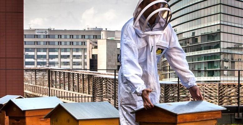 Apiculture urbaine : l'entretien des ruches le printemps