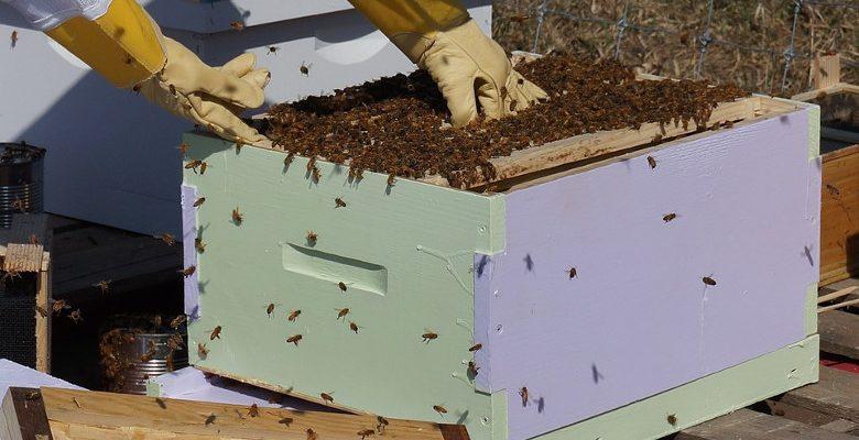 Sauvegarde des abeilles : parrainer une ruche