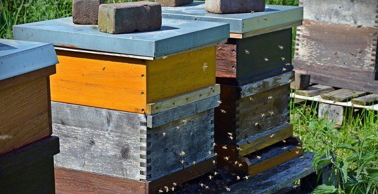 Apiculture urbaine : comment choisir l'emplacement des ruches ?